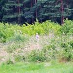 20140614_161540_foto_Koutnikovi_295